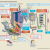 Municipal waste incineration technology – Sanitary disposal technology with high-environment preservation capability