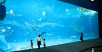 Nippura Co., Ltd. – Aquarium Manufacturer