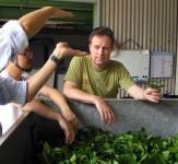 O-Cha.com – Japanese Green Tea & Matcha