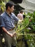 Wasabi Farm: Yuma Mochizuki