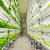 Fujitsu Converts Fukushima Microchip Factory into a Radiation-Free Lettuce Farm