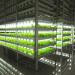 Mirai, Inc. - Plant Factory With LED Light