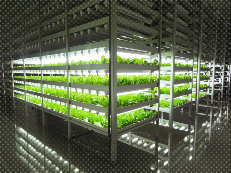 worlds largest plant factory with led lighting built in