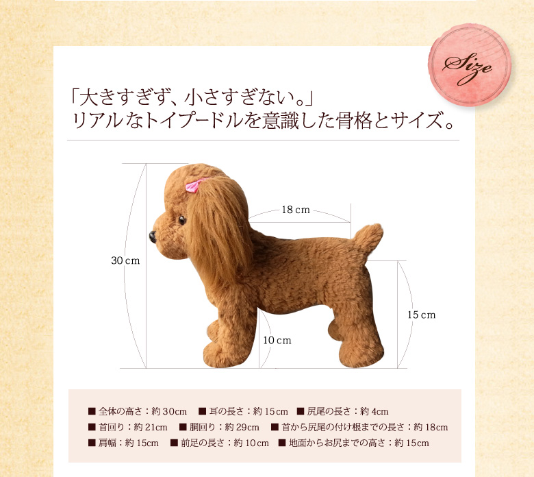 Not too big, not too small, just right size. The skeleton and body size are realistic toy poodle.