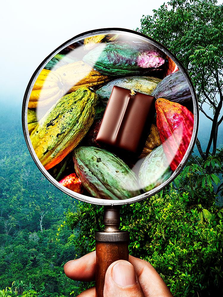 NO.4 San Martin ~Voyage sans fin en quête du cacao~