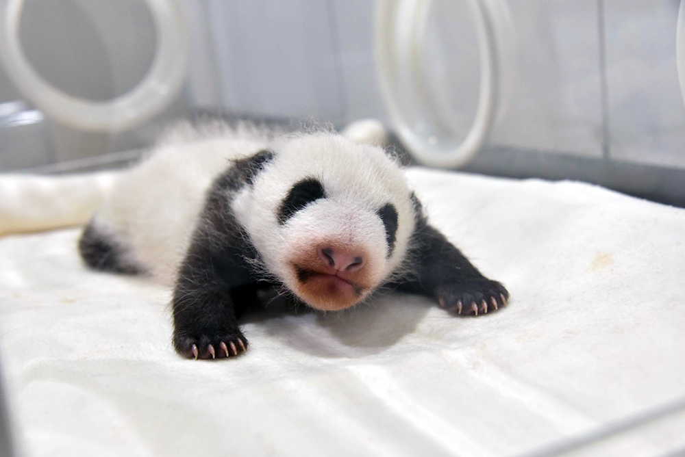 Adventure World: Panda Baby 05