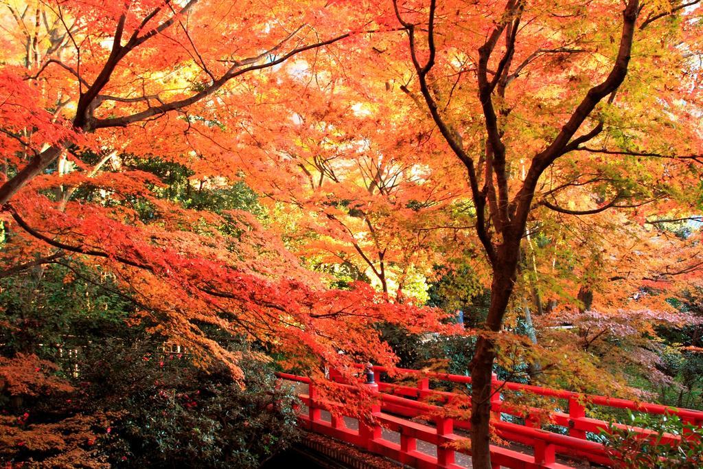 Hotel Chinzanso Tokyo - Japanese Garden Autumn