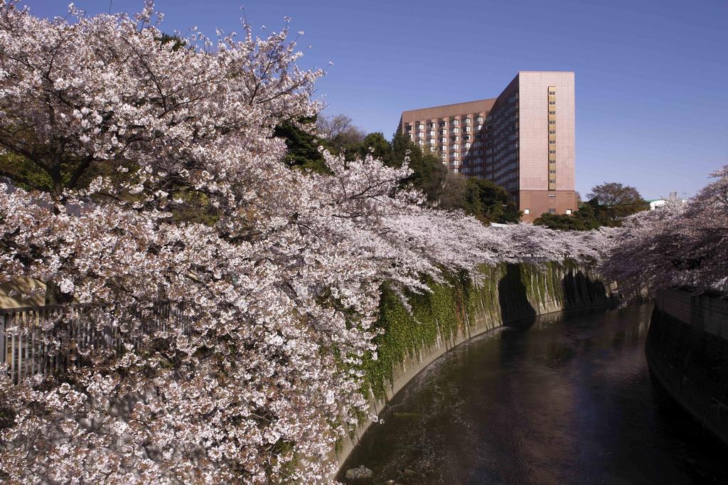Hotel Chinzanso Tokyo - Cherry Blossom