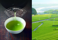 Pesticide-Free & Genuine Japanese Tea Manufacturer Since 1865 – Kanei Hitokoto Seicha Inc.